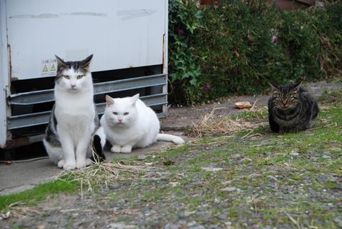 酒田の猫ヅラ前国技館