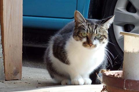 平日限定猫太麺