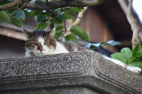 日替り猫と定食