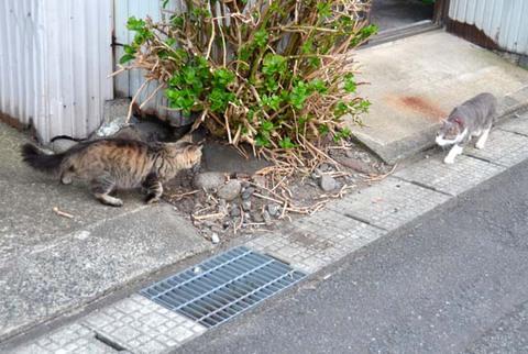 日替り猫定食2