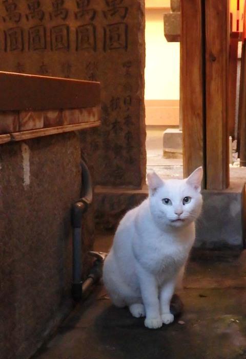 法善寺横丁猫