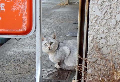 酒田湊町猫