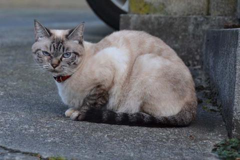 日替り猫と弁当