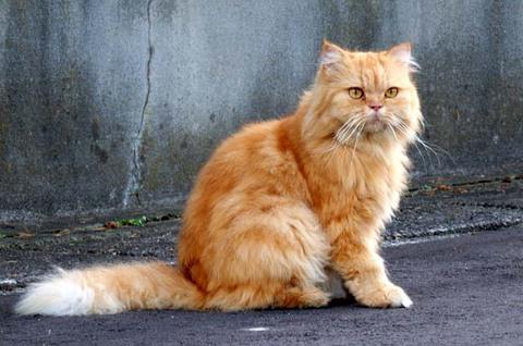 日替り猫定食