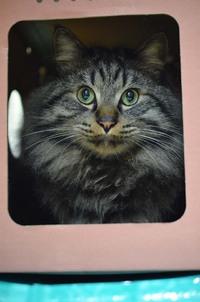 ブルーム2軒目カレー猫