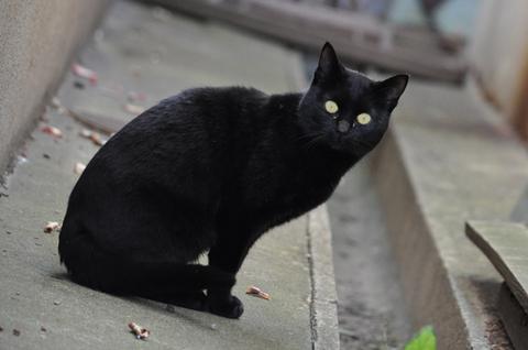 朝ラーメン黒猫