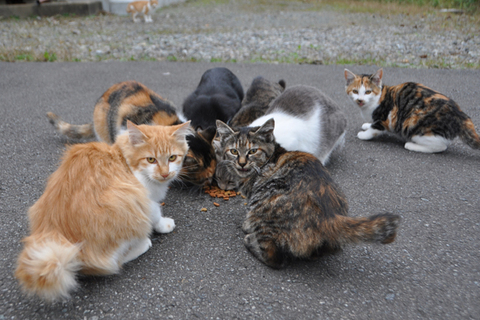 庄内猫 秋の陣
