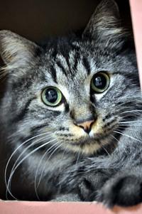 タコライス猫カメラ 2017/08/04 03:42:57