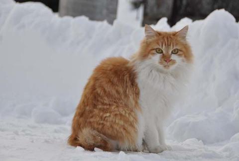 猫 活動写真 3