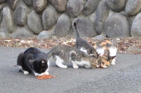 鶴岡のキャットフード猫朝飯前編