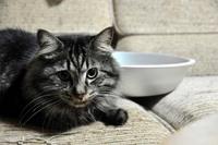夏の猫鍋アンジュ