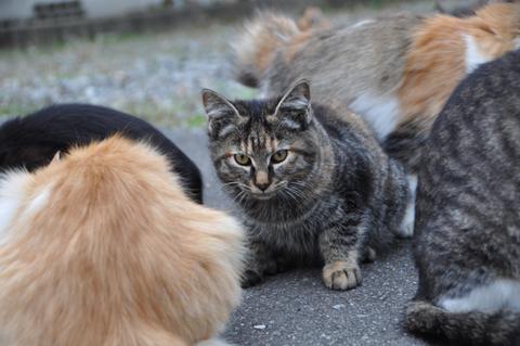 庄内鶴岡秋の猫