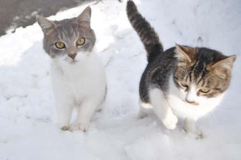 庄内猫活動写真其の4