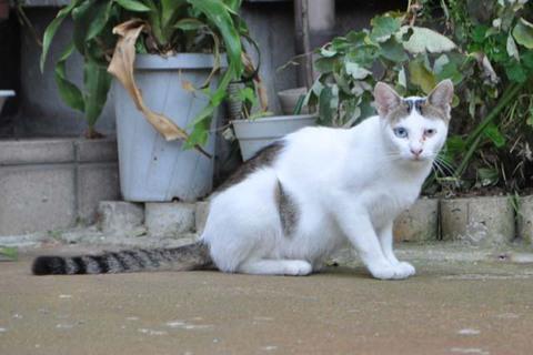庄内猫街道まっしぐら