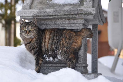 庄内猫活動写真其の3