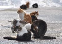 庄内猫活動写真其の4 2018/02/02 23:05:19