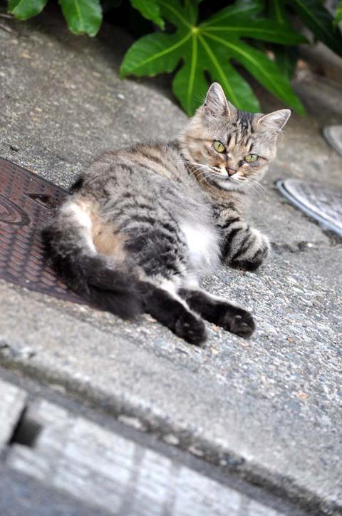 庄内猫街道其の1