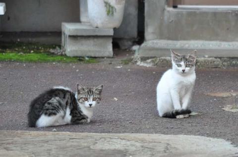 庄内猫街道其の2