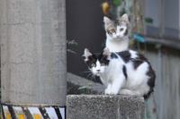 庄内猫街道其の4