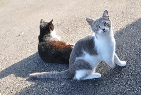 アンジュとニャンコ
