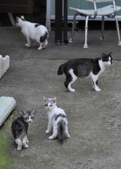 庄内猫街道其の3