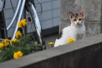 庄内猫街道其の5
