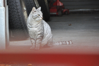 山形霞城公園猫其の1