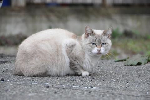 日替定食酒田猫