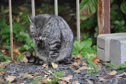 山形霞城公園猫其の3