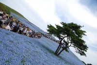 ひたち海浜公園其の21