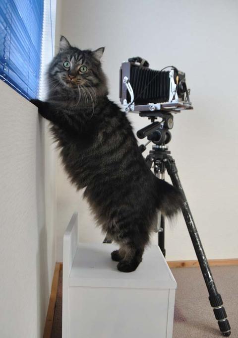 写真機アンジュ