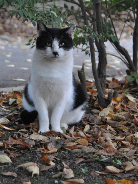山形霞城公園猫其の4