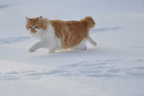 猫 活動写真 1