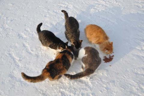 猫 活動写真 2