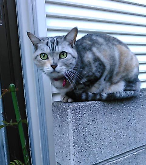 ブルーム30回目ラーメン猫
