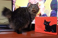 アンジュ黒猫クッキー