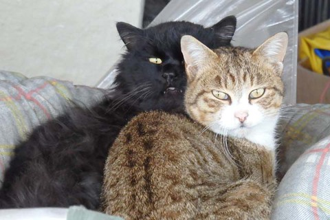 カツカレー活猫