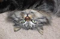アンジュ 飛び猫写真展