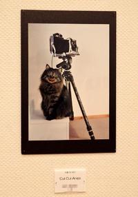 第11回鶴岡市民写真展
