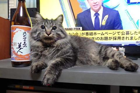 アンジュ島美人猫ちぐら
