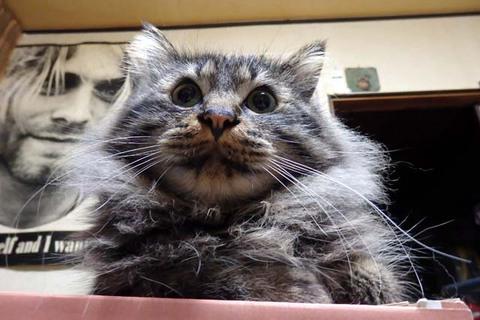 猫手ボウリング大会