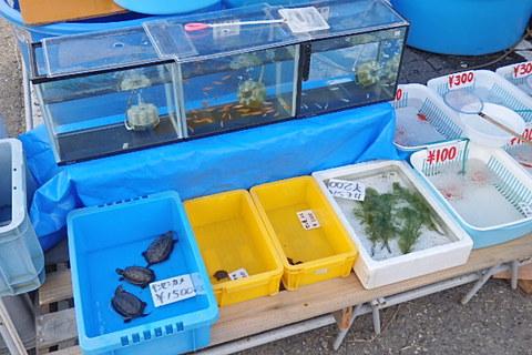 植木金魚まつり