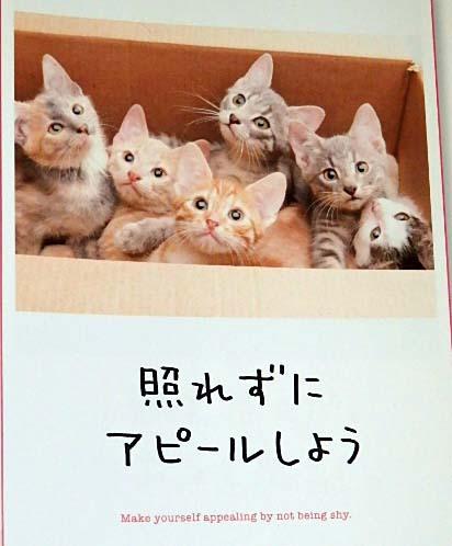 ざる二色盛り猫