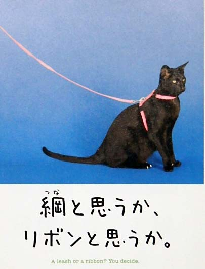 猫ネコ詐欺