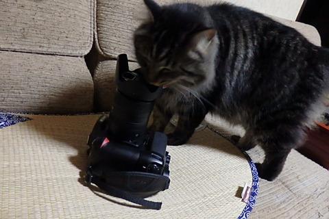 タコライス猫カメラ