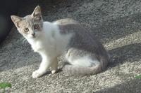 灰白のチビ猫登場