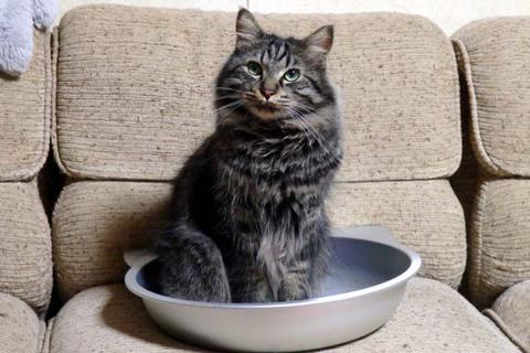 猫鍋日替り定食