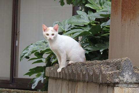 日替り猫定食ラーメン