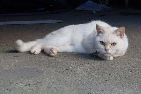 日替猫定食麻婆