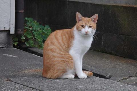 日替猫定食茶トラ
